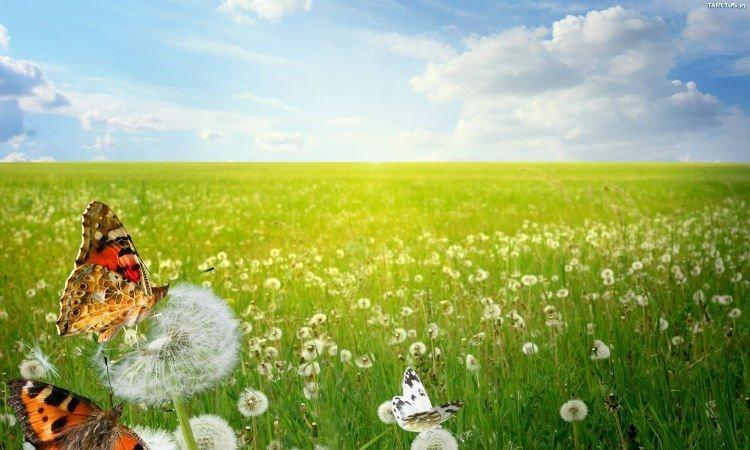 Sezon na alergię - Apteka internetowa Melissa