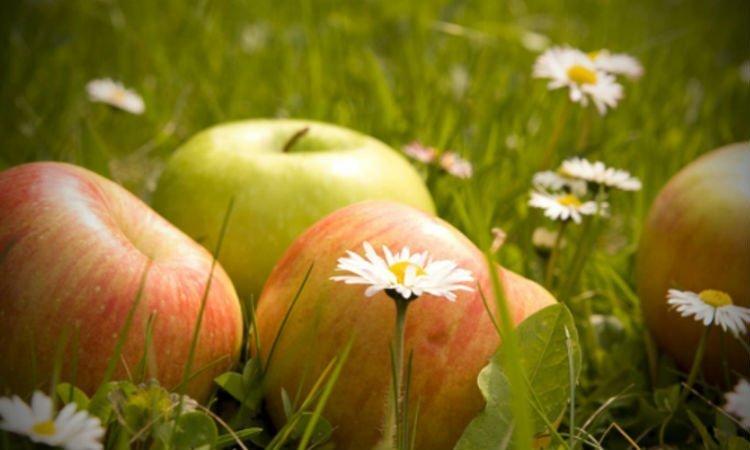 Odchudzanie na wiosnę - Apteka internetowa Melissa