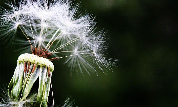 Jak walczyć z alergią na pyłki? - Apteka Internetowa Melissa