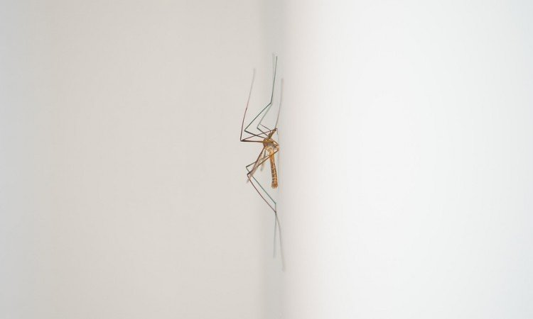 Jak łagodzić ugryzienia po komarach? - Apteka internetowa Melissa