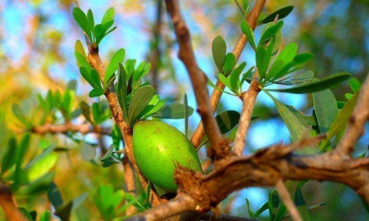 Olej arganowy w codziennej diecie - Apteka internetowa Melissa