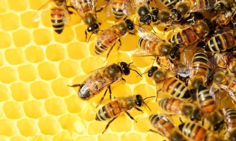 Pszczela apteczka. Miód, propolis, pyłek kwiatowy i ich korzystne właściwości - Apteka internetowa Melissa