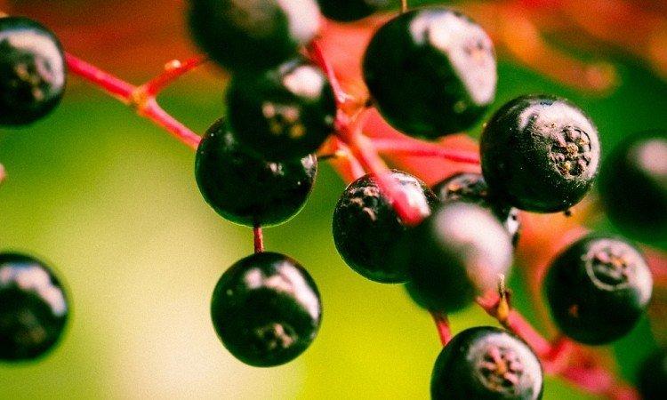 Roślinne ekstrakty pomocne w walce ze stanem zapalnym zatok - Apteka internetowa Melissa