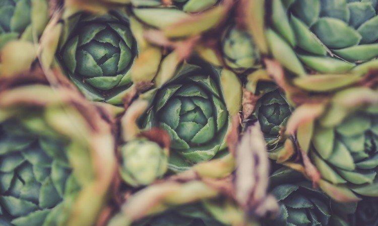 Ulga dla organizmu w okresie choroby wątroby - Apteka internetowa Melissa