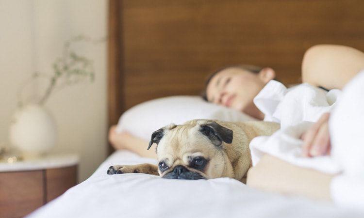 Zioła uspokajające i na zasypianie - Apteka Internetowa Melissa