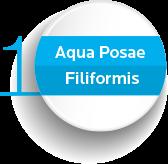 Aqua Posae Filiformis